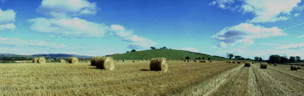 Harvest time, near Allander Toll in Dunbartonshire. Lands with links to Clan Graham & Clan Lennox.